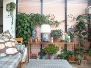 Πως να μεταφέρεις τα φυτά σου στο νέο σπίτι – Χρήσιμες συμβουλές